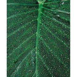 Poster/Konsttryck - Löv i detalj