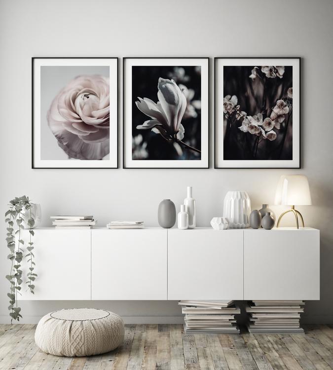 Poster/Konsttryck - Ros i närbild