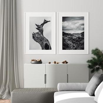 Poster/Konsttryck - Skogslandskap