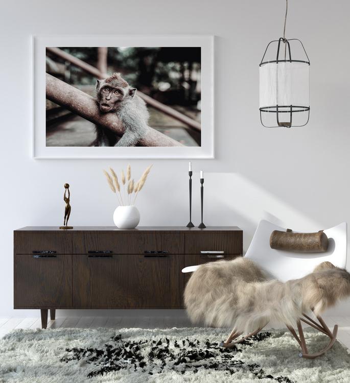 Poster/Konsttryck - Förvånad apa