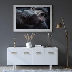 Poster/Konsttryck Två Apor