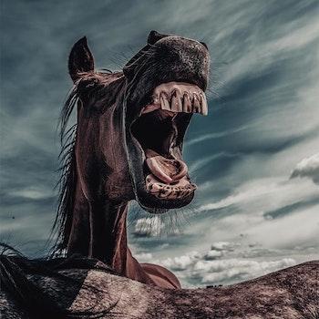 Poster/Konsttryck - Skrattande häst