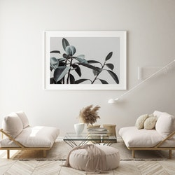 Poster/Konsttryck - Elegant växt