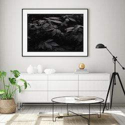 Poster/Konsttryck - Svarta Löv