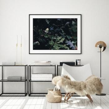Poster/Konsttryck - Ekollon
