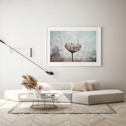 Poster/Konsttryck - Vildblomma