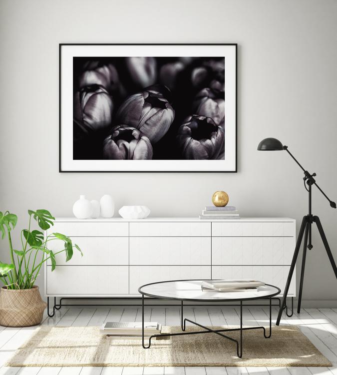 Poster/Konsttryck - Tulpaner