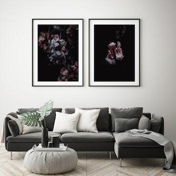 Poster/Konsttryck - Hortensia