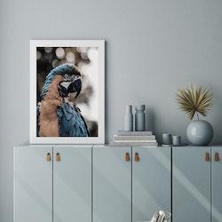 Poster/Konsttryck - Papegoja
