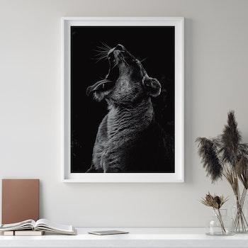 Poster/Konsttryck - Lejonhona