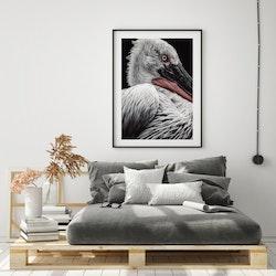 Poster/Konsttryck - Pelikan
