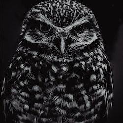Poster/Konsttryck - Uggla