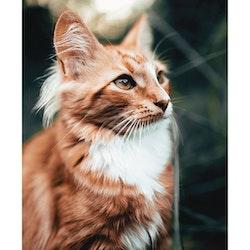 Poster Katt - Färg