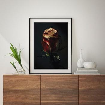 Poster/Konsttryck - Gyllene Ros