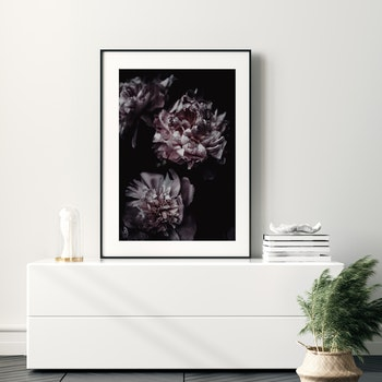 Poster/Konsttryck - Tre rosor