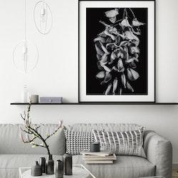 Poster/Konsttryck - Blommor i svartvit