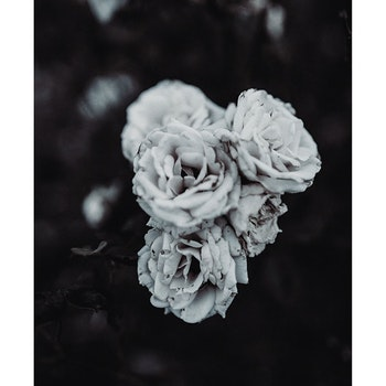 Poster/Konsttryck - Vit Bukett