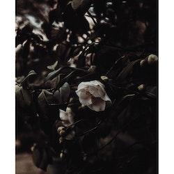 Poster/Konsttryck - Blombuske