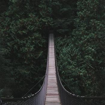 Poster/Konsttryck - Hängbro