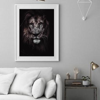 Poster/Konsttryck - Lejon