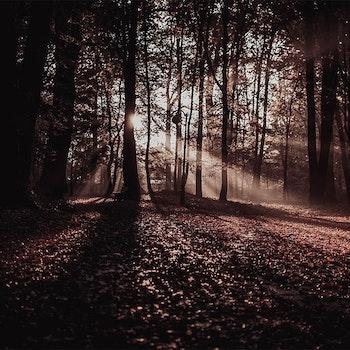 Poster/Konsttryck - Löv i årstid