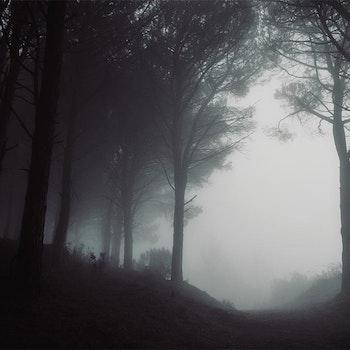 Poster/Konsttryck - Dimma i Lövskogen