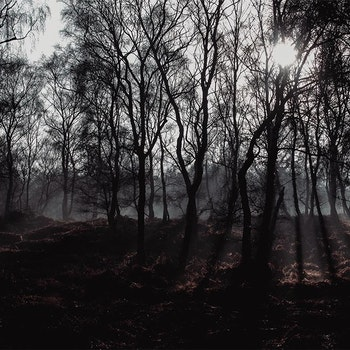 Poster/Konsttryck - Ljus Bland Träden