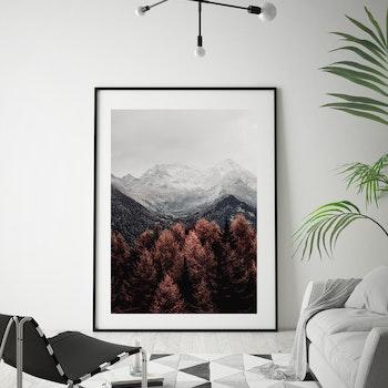 Poster/Konsttryck - Skogsvy