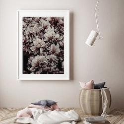 Poster/Konsttryck - Blommor i träd