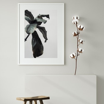 Poster/Konsttryck -  Bladväxt i detalj