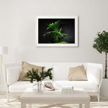 Poster/Konsttryck - Palmblad