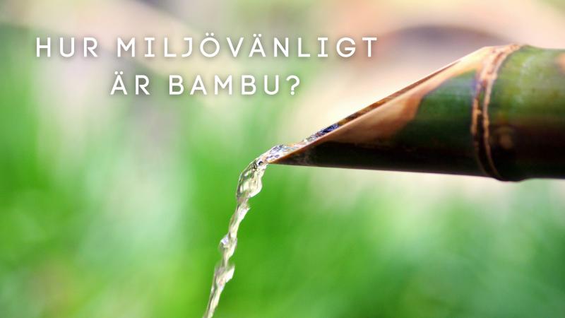 Hur miljövänligt är bambu?