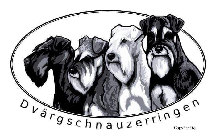 Trickhund dvärgschnauzer - 1st Rosette