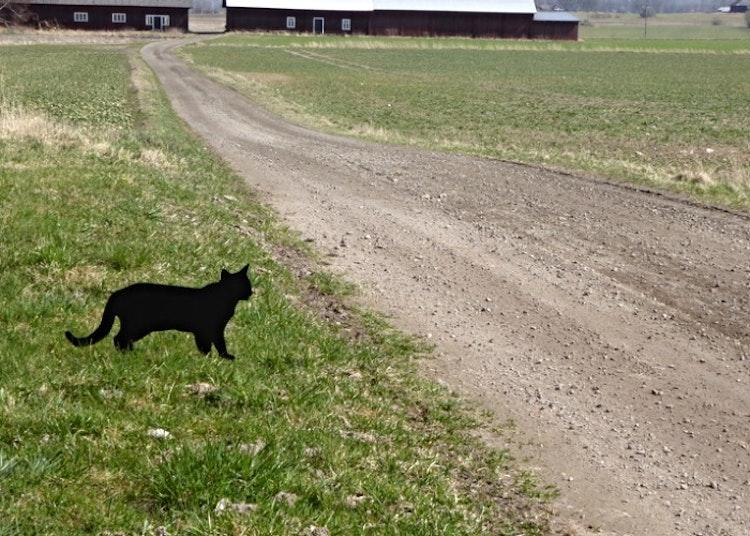 Siluett av katt i plåt vid vägkant.