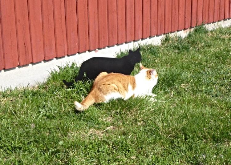 Katt och kattsiluett i gräset.
