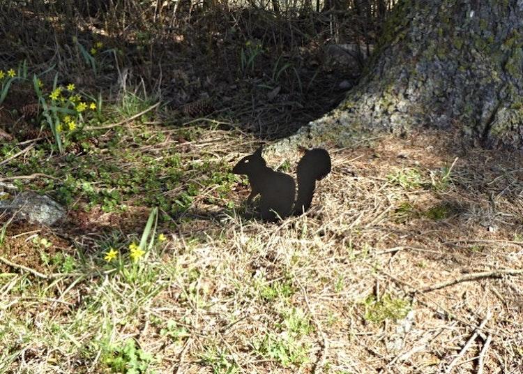 Siluett i form av en ekorre som sticker ner i marken.