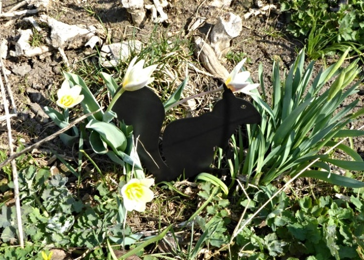 En svart ekorre i plåt som sticker ner i marken.