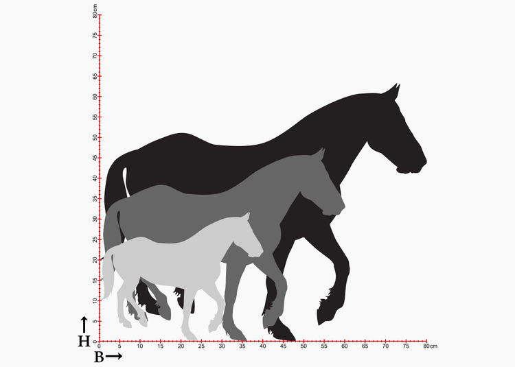 Hästsiluetter i diagram som visar tre olika storlekar.