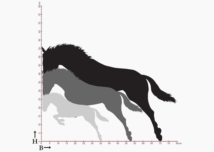 Storleksdiagram med hästsiluetter.