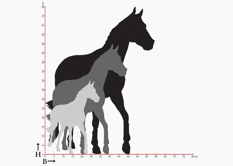 Diagram med hästsiluetter i olika storlekar.
