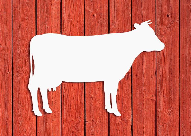 Vit fasaddekor föreställande en ko, monterad på röd husvägg.
