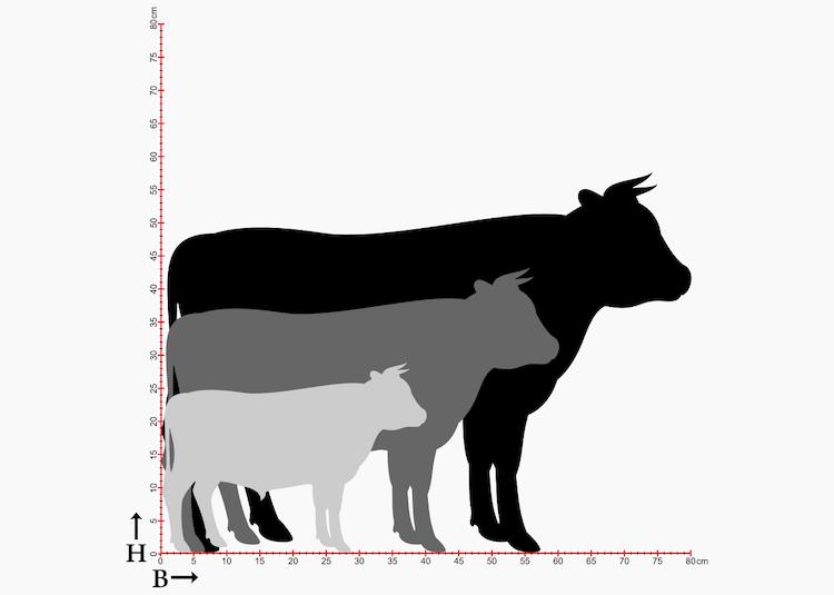 Storlekstabell med siluetter av tjurar i tre storlekar.