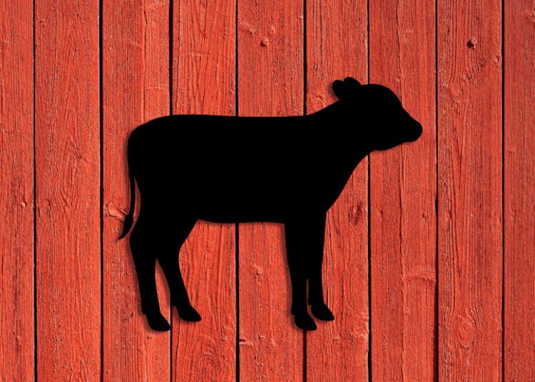 Svart siluett av kalv på röd vägg.