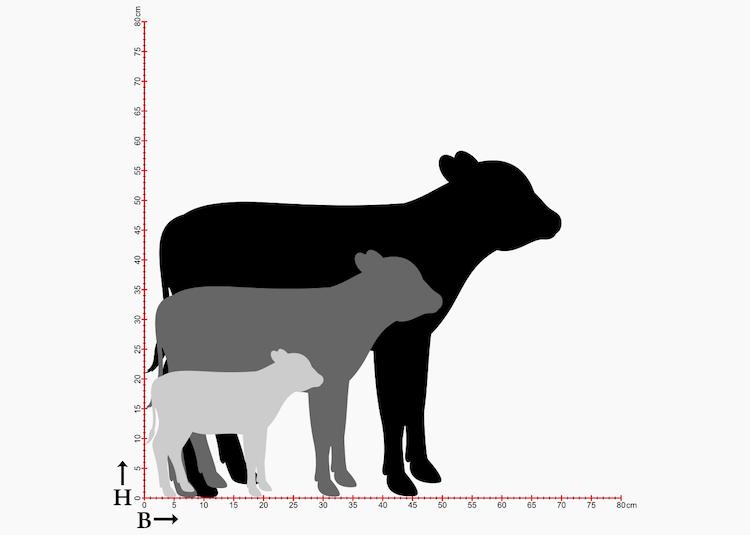 Storlekstabell med siluetter av kalv i 3 storlekar.