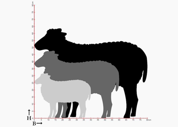 Storlekstabell med fårsiluetter i 3 storlekar.