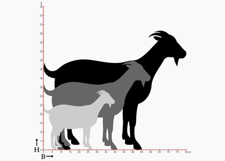 Storlekstabell med getsiluetter i 3 storlekar.