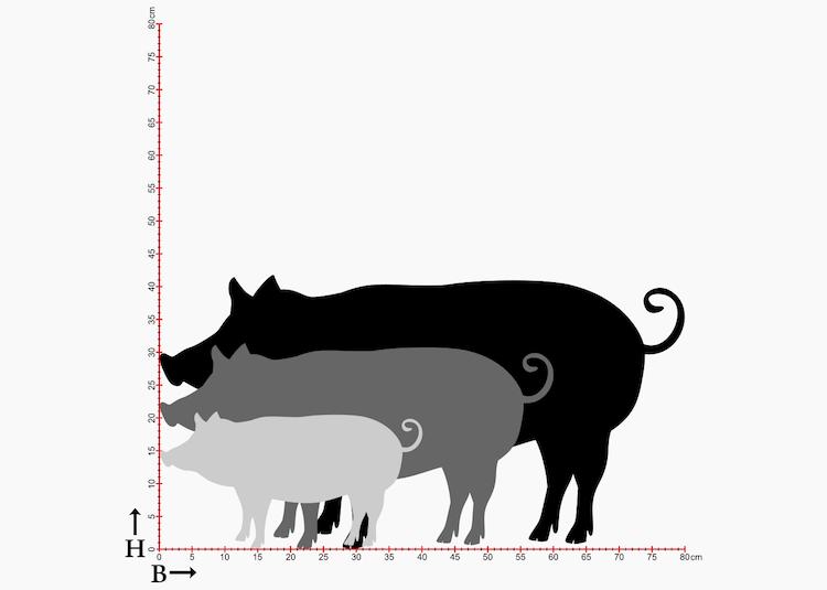 Storlekstabell med grissiluetter i 3 storlekar.