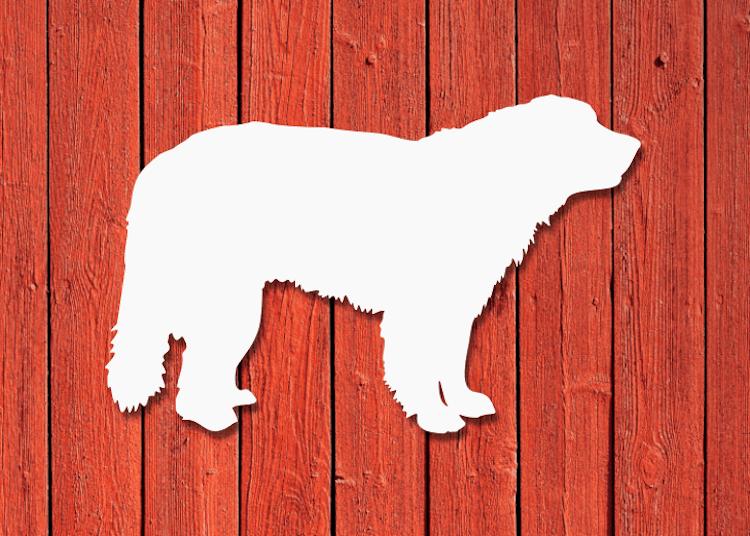 Vit fasadsiluett av en hund, Leonberger.