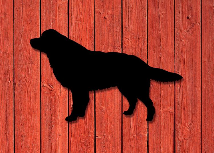 Siluett i plåt av en Berner Sennen hund, svartlackerad.