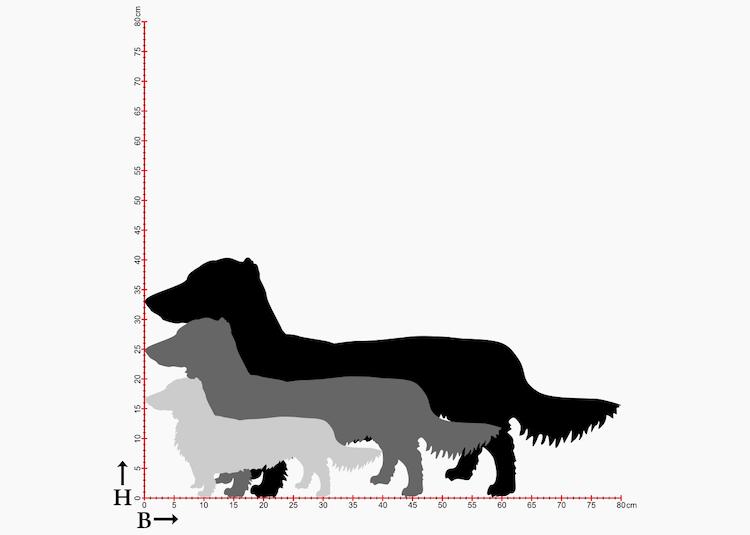 Diagram av 3st storlekar på hundrasen Tax, siluetter i plåt.